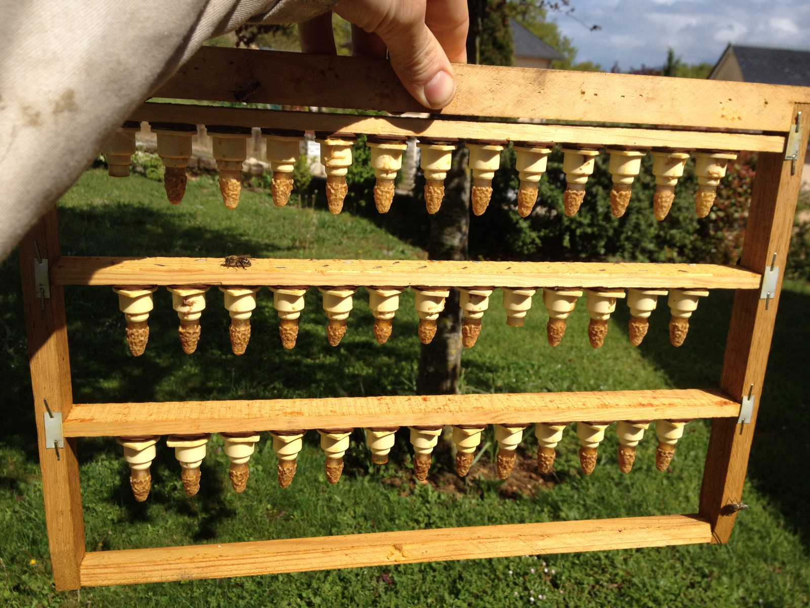 elevage de reines d 39 abeilles. Black Bedroom Furniture Sets. Home Design Ideas